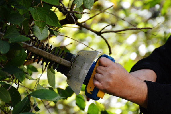 Hedge-Shears-vs-Hedge-Trimmer-feat